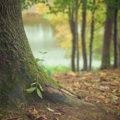風邪や花粉症対策にも!心を穏やかにする「樹木系」のおすすめの精油8選
