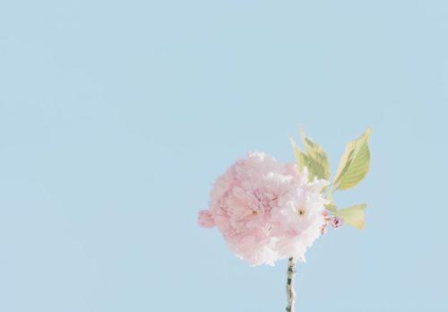 空と花の画像