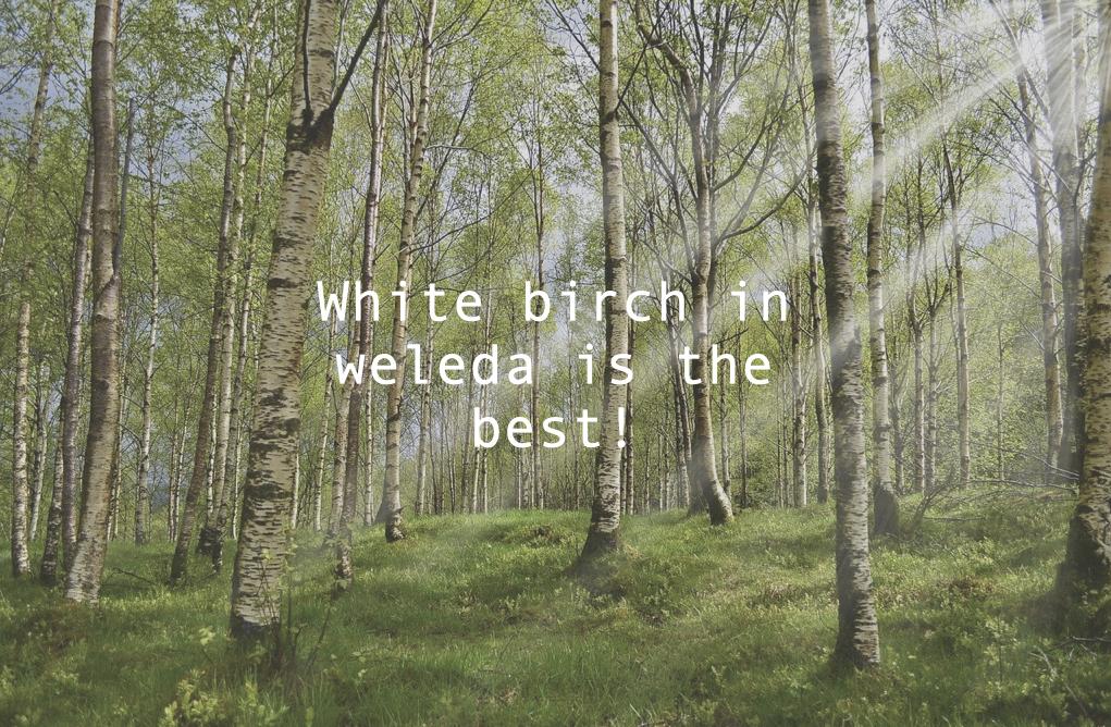 ホワイトバーチのアイキャッチ画像